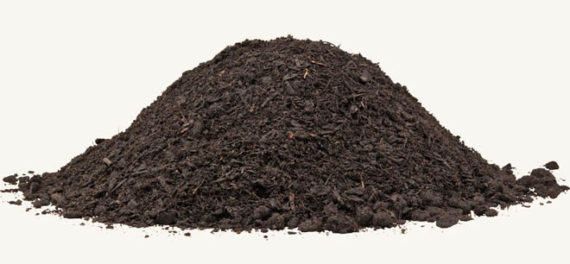 black mulch
